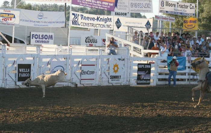 Roping a steer at The Folsom Pro Rodeo.