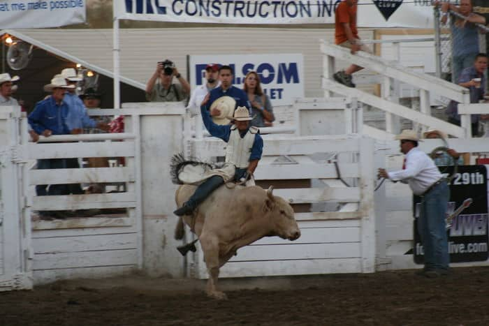 Ride that steer, at The Folsom Pro Rodeo.