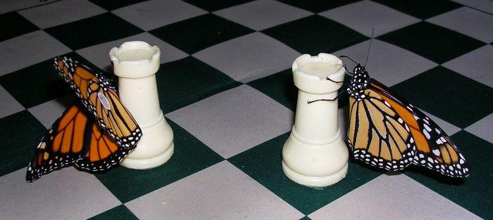 chessbutterfly