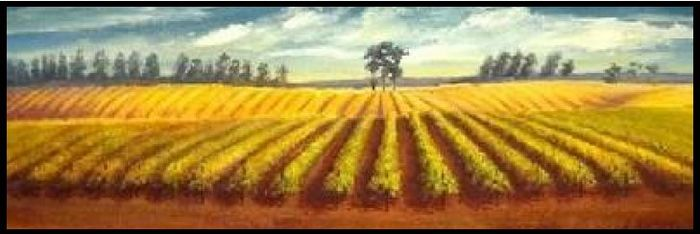 Starmont vineyard