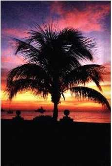 BeachPalmSunset