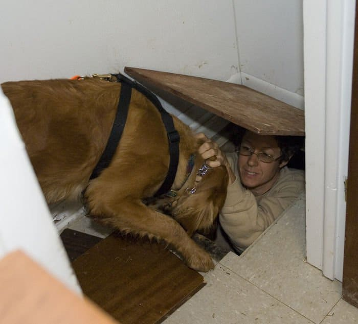 Kelsey, a three year old Golden Retriever, finds Lisa Harper in her hiding place at Muscatatuck Urban Training Center in Butlerville, Ind. The Indiana Department of Homeland Security conducted a search and cadaver dog training session using some of the buildings at MUTC as training sites.