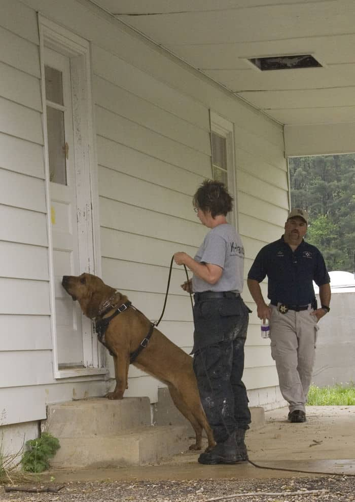 Handler Talerie Brown follows her two year old bloodhound, Bessie, into a house at Muscatatuck Urban Training Center as Master Trainer Deputy Sheriff Mark Matranga of Assumption Parrish, La., watches closely.