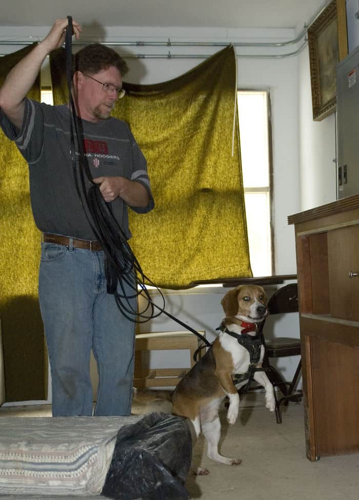 Sam, a two year old Beagle, stands on his hind legs in order to get a better look and smell of a piece of furniture as handler Tim Hartsock gives him enough lead to do his job at Muscatatuck Urban Training Center in Butlerville, Ind. The Indiana Department of Homeland Security conducted a search and cadaver dog training session using some of the buildings at MUTC as training sites.