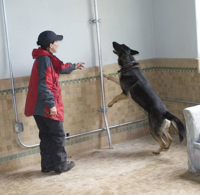 Handler Janet Anagnos leads her dog, Bullitt, through the cadaver search training site at Muscatatuck Urban Training Center in Butlerville, Ind.
