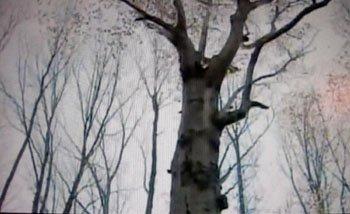 matthew hoffman tree