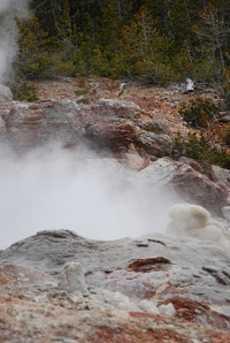 Yellowstone ro