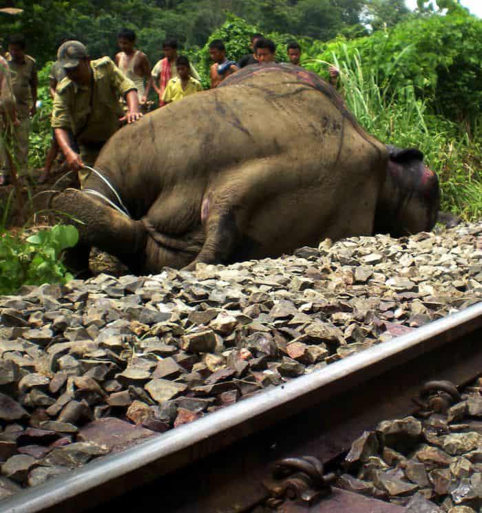 Elephant Killed 01