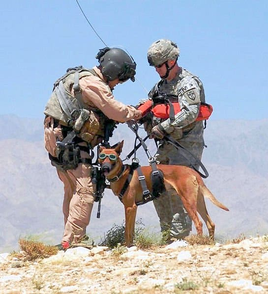 military dogs PTSD