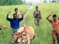 BSF Soldiers Catch Illegal Bangladeshi Cattle Thieves