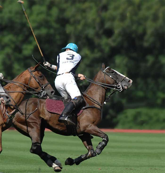 polo ponies, not philip kapneck