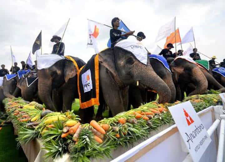 thai street elephants feeding.