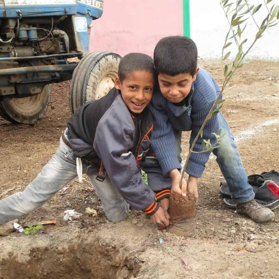 planting trees in morocco