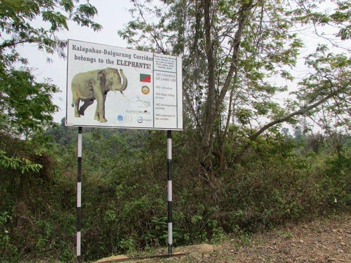kalaphar daiguru elephant corridor view