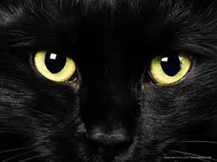 superstitions - black cat eyes.