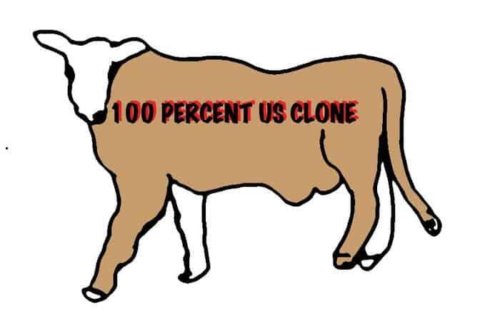 Cloned cow cartoon.