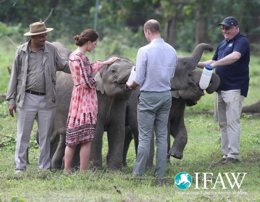 Prince William and Princess Kate bottle feed orphaned elephant calves and baby rhinos at IFAW/WTI's wildlife rescue center in Kaziranga, India.