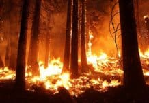 wildfires hit alberta
