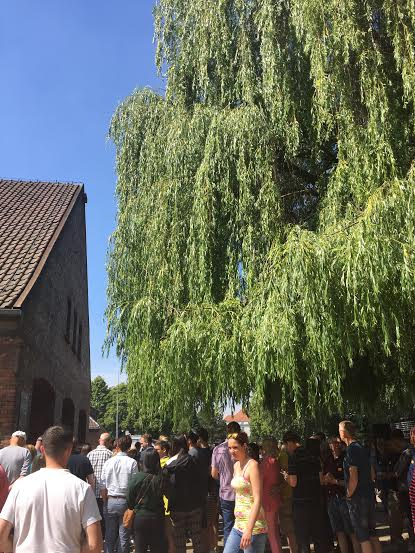 Auschwitz I - the old willow tree, has been crying for decades.