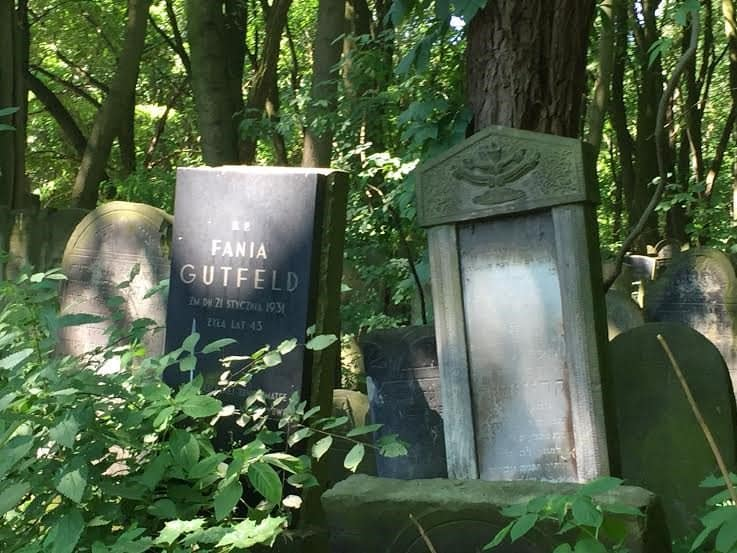 A forest full of graves.