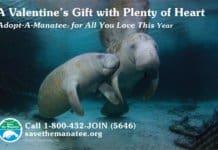 Manatee Valentine 2017 poster