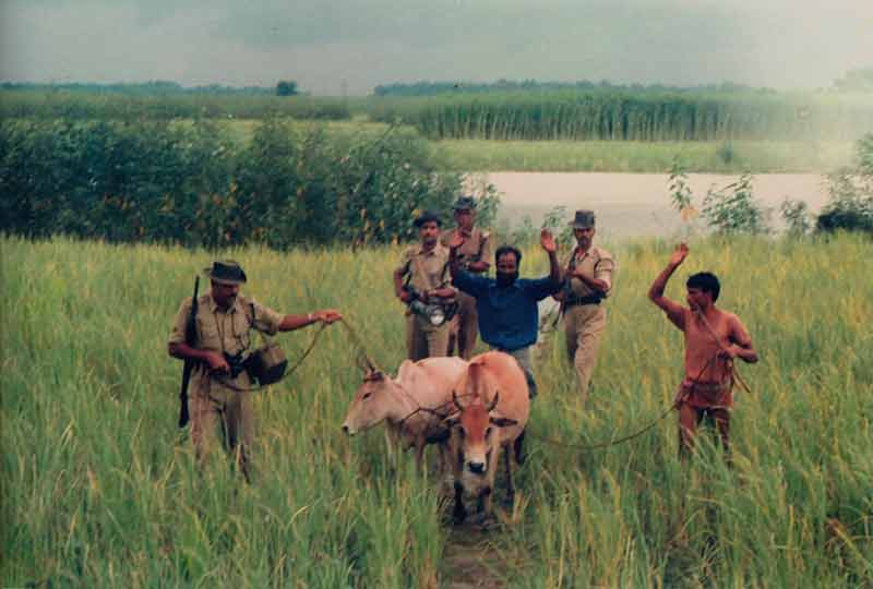bsfi soldiers with two cattle smugglers and cattle.