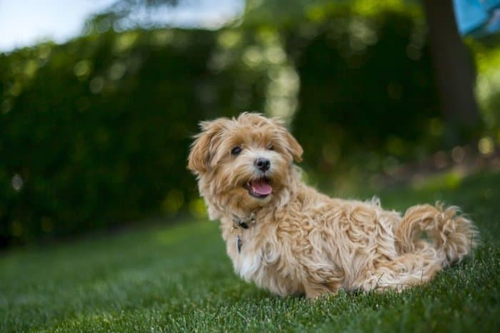 dog 700x467 - Four Tips To Keep Your Pets Happy And Healthy