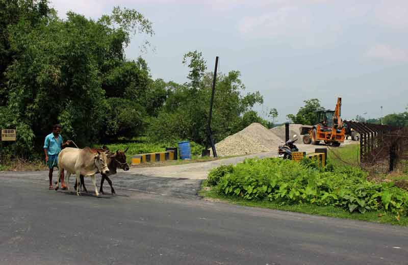 driving cattle at the international border.
