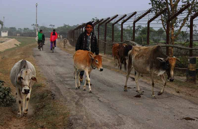 farmers return home from paddy fields.