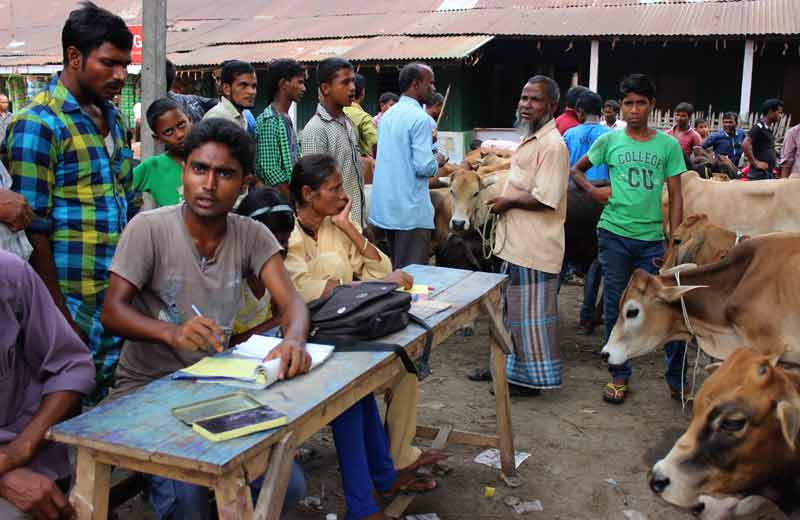 seller, buyers and cattle at the market.