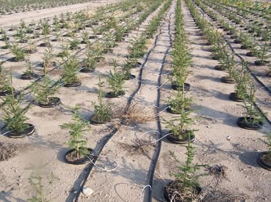 Israel's drip irrigation invention