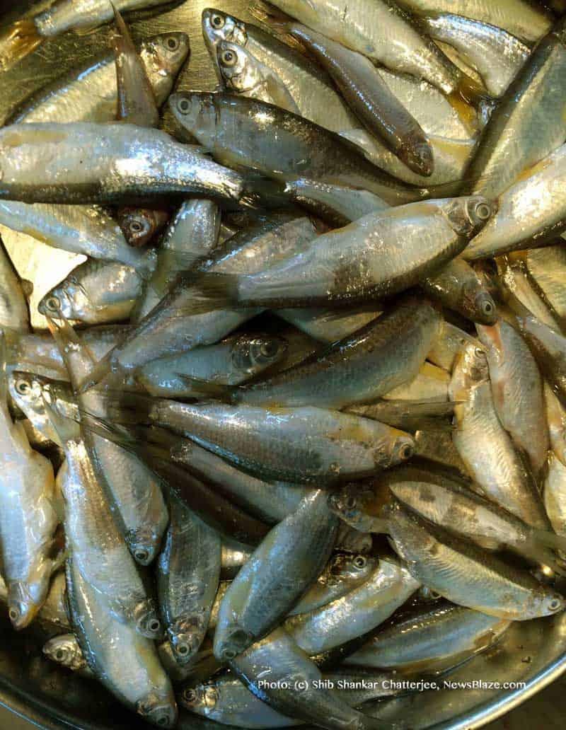 boroli fish