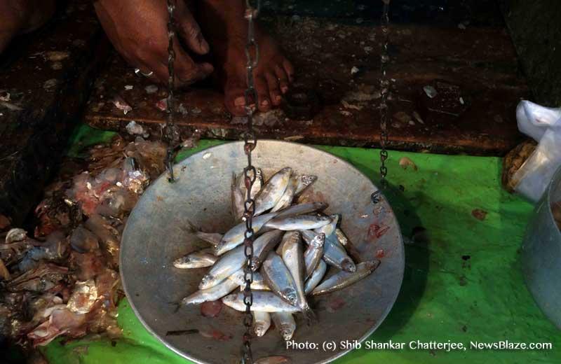 dilip halda sells boroli fish