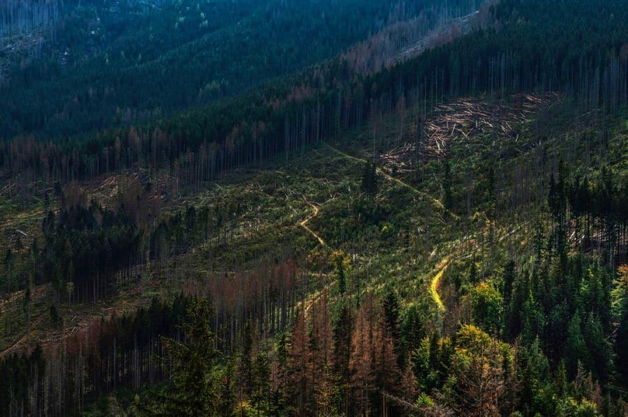 how to stop deforestation. Photo by Janusz Maniak on Unsplash