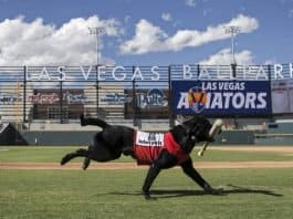 Las Vegas Aviators Finn Bat dog