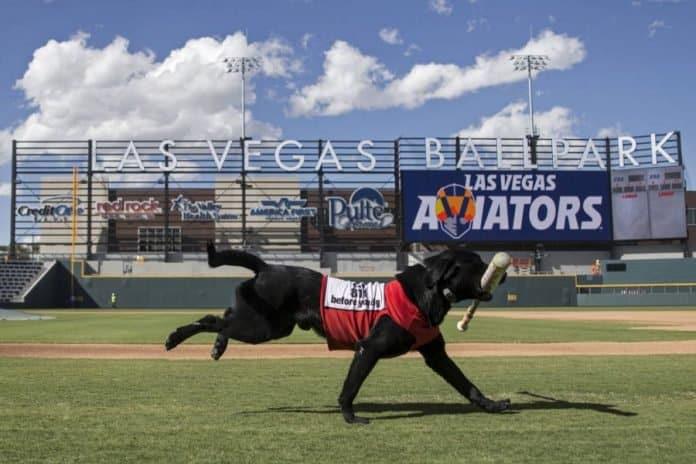 Las Vegas Aviators Finn Bat dog