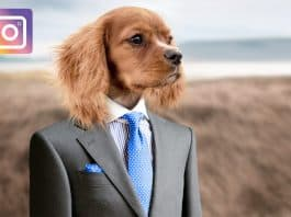 dog famous on instagram, pixabay image