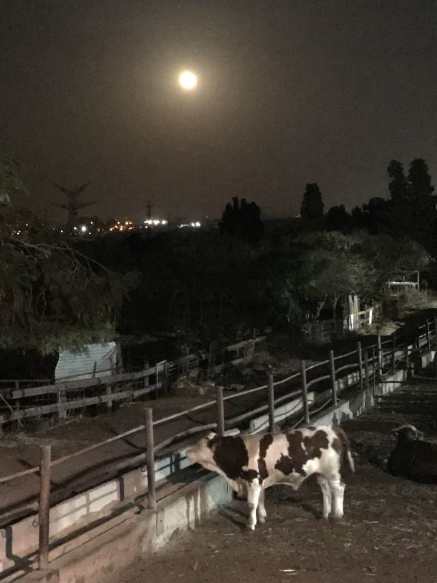Yechiam Altschuler farm the night I guarded it - Photo credit Nurit Greenger