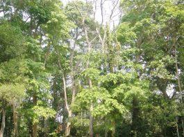 dehing patkai forest. Photo by Nava Thakuria.