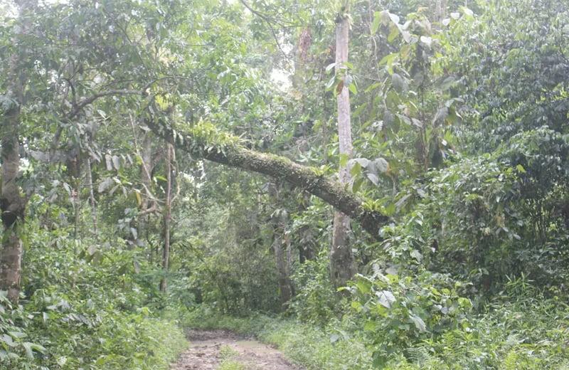 dehing patkai forest path. Photo by Nava Thakuria.