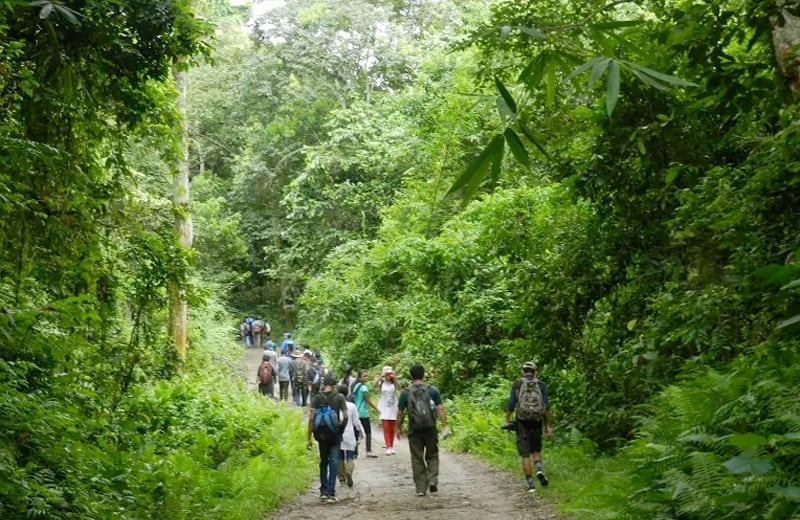 walking in dehing patkai forest. Photo by Nava Thakuria.