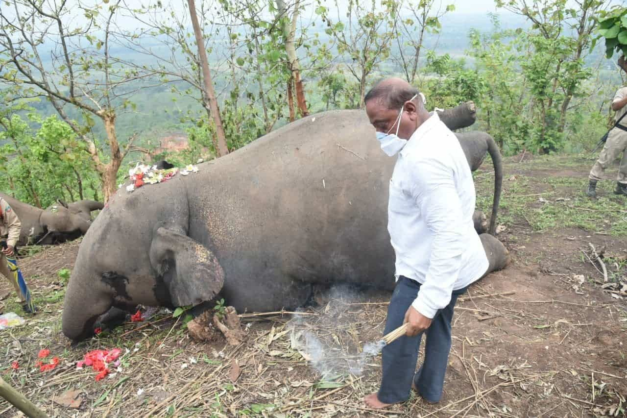 Man paying respects to dead elephants. Photo c/o Nava Thakuria