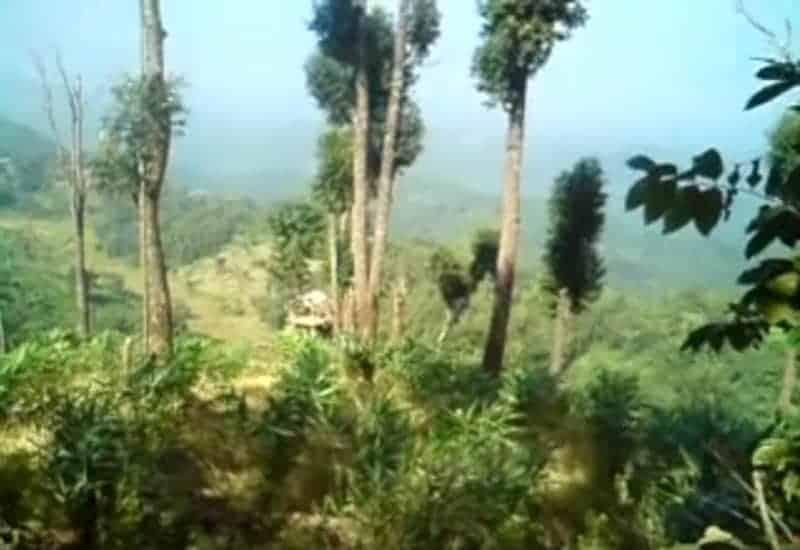 कार्बी आंगलोंग वन - पांच विद्रोही समूह आते हैं।